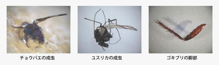 昆虫の画像